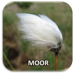Kachel Moor